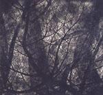ヒルサイドフォーラム特別展: 船田玉樹 - 創造の森へ